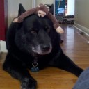 Riley and a Monkey